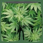 Weed Marijuana Plant Leaves Cool Wonderful Men's Boxer Brief