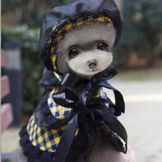 Royalty Plaid & Lace Pattern with Hat Party Costume for Dog - Woof Apparel