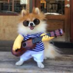 Cute Little Rockstar with Guitar Funny Costume for Dog - Woof Apparel