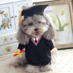 Student Graduate Toga Funny Standing Costume for Dog - Woof Apparel