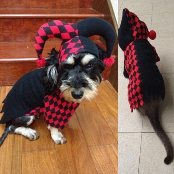 Funny Clown Red & Black Jumpsuit Hoodie Costume For Dog - Woof Apparel