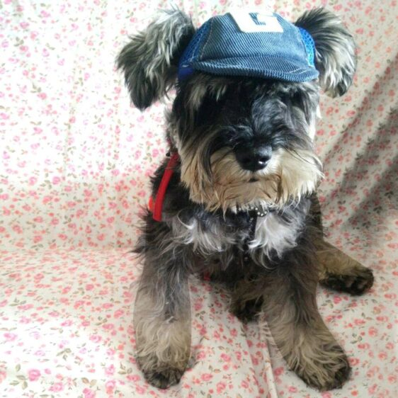 Adjustable Baseball Sports Hat For Your Fashionable Dogs - Woof Apparel
