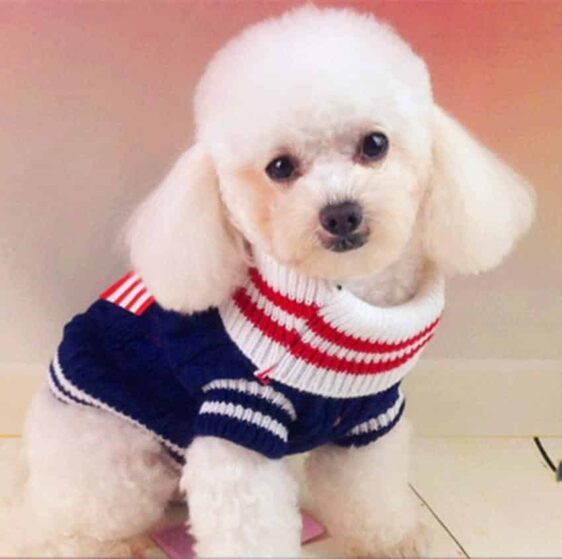 Cute Ribbon Knitted Winter Outfit Small Dog Sweatshirt - Woof Apparel