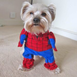 Spiderman Superhero Red & Blue Cute Costume for Dog - Woof Apparel