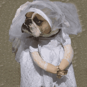 Beautiful Wedding Bride Dress White Small Costume For Dog - Woof Apparel