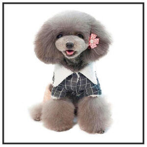 Dog Costumes & Clothes