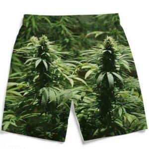 Ganja Marijuana Mary Jane Plant Nugs Dope Men's Boardshorts